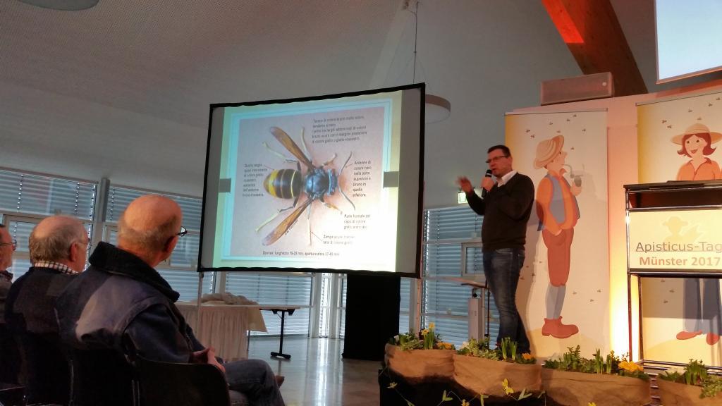 Andreas Platzer zeigte die Unterschiede der Asiatischen Hornisse, die vor allem durch den schwarzen Brustteil und die gelben Fussspitzen auffällt..
