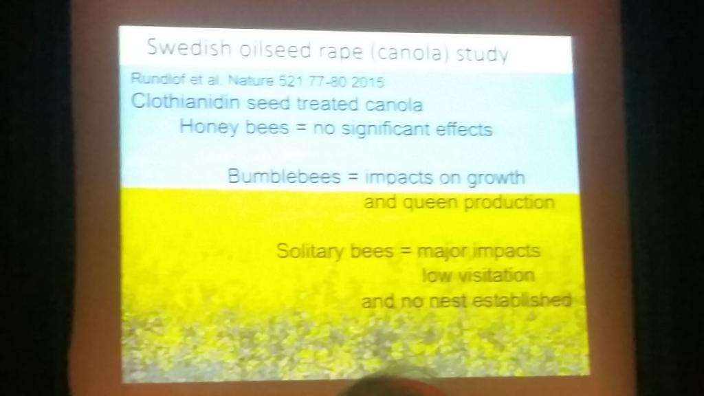 Dort wurde klar, dass die Honigbiene am besten klar kam und vor allem die anderen Gruppen litten.