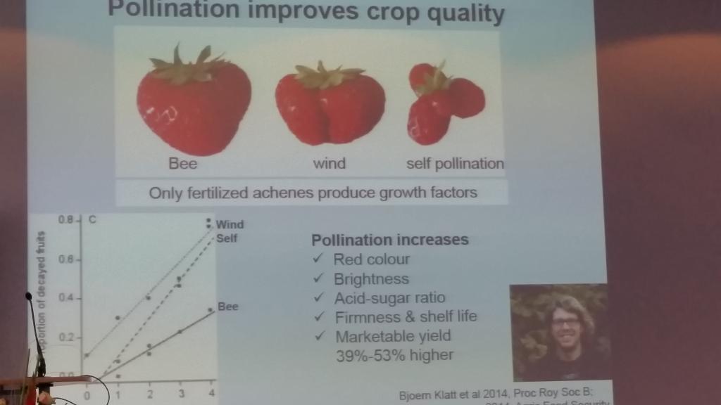 Prof. Tscharntke machte deutlich, wie die Qualität der Produkte und die Lagerfähigkeit durch Bienenbestäubung verbessert wird.