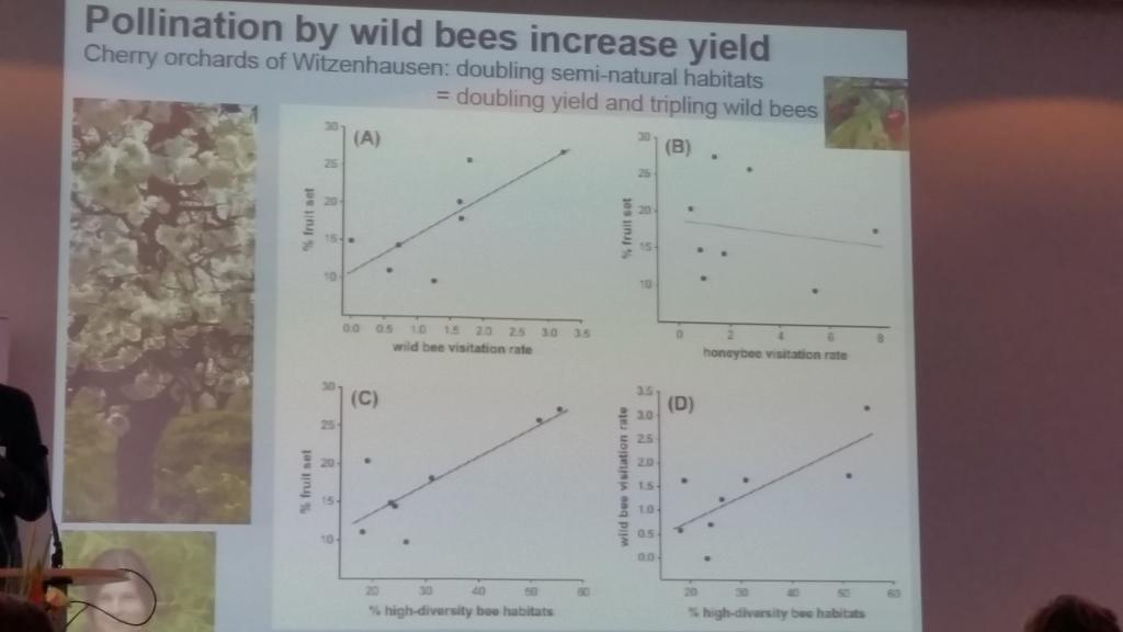 """Die Anwesenheit von Solitärbienen erhöht die Bestäubung und damit die Ernte - teilweise auch durch die """"Störung"""" der Honigbienen bei der Bestäubung durch den Wechsel zwischen den Pflanzreihen."""