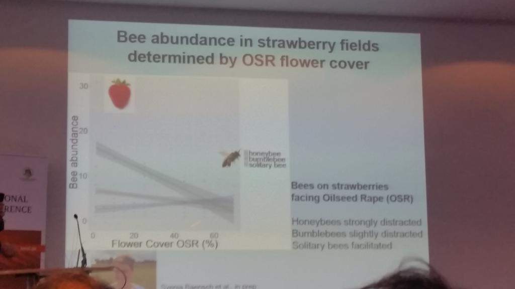 Bienen werden durch unterschiedliche Trachten unterschiedlich stark abgelenkt