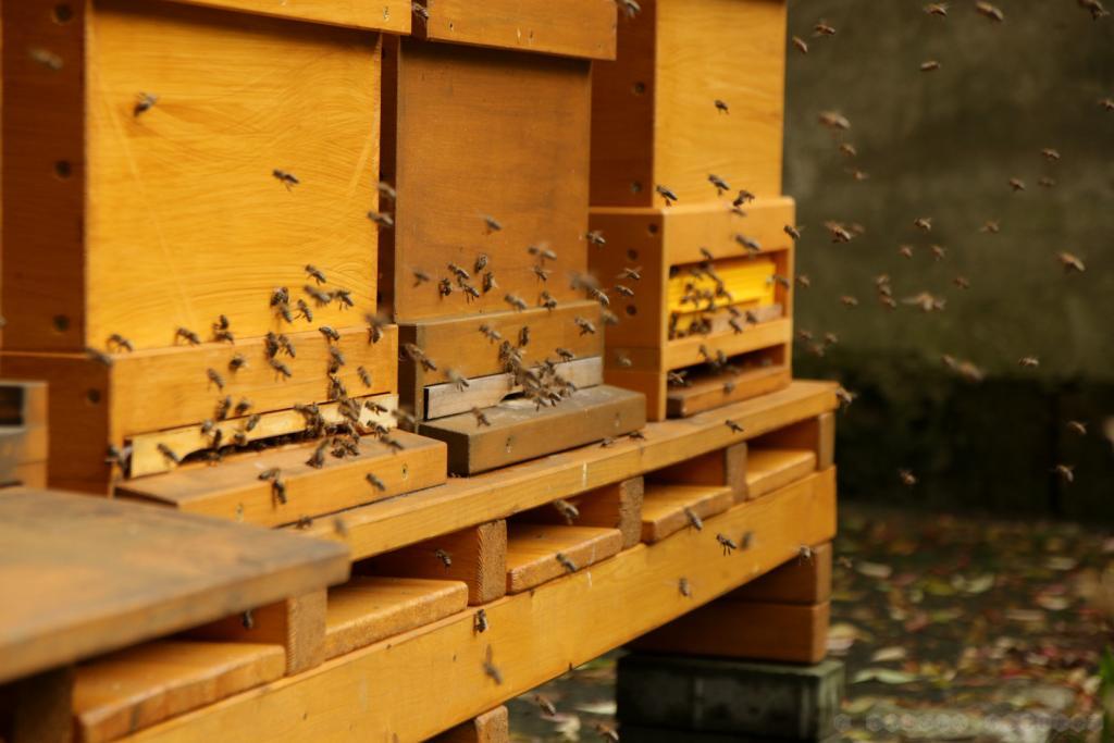 Bienenflug Ende Oktober