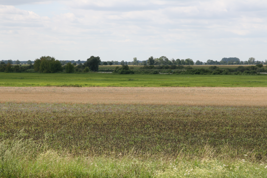 Blick vom Rastplatz - mit der Havel im Hintergrund