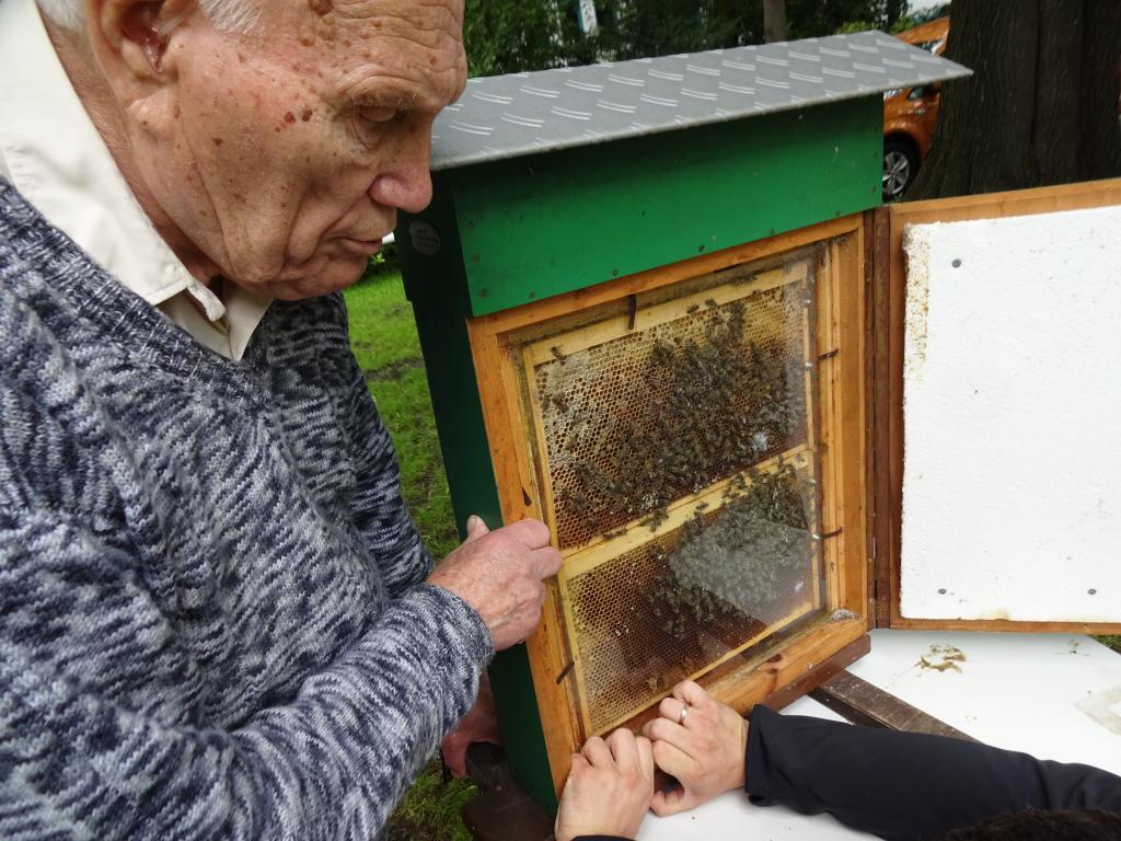 Das Bienenschauvolk war natürlich auch mit dabei!