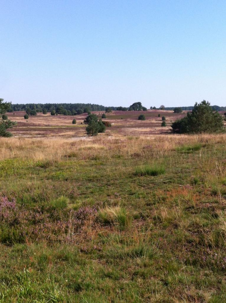 Aufbruch in die Heide - eine karge, trockene aber bezaubernde Kulturlandschaft.