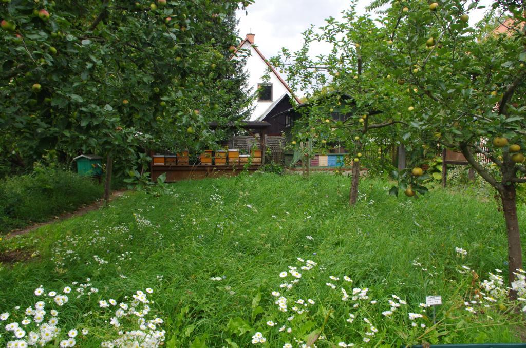 Der Bienengarten mit Bienen und Obstblüten