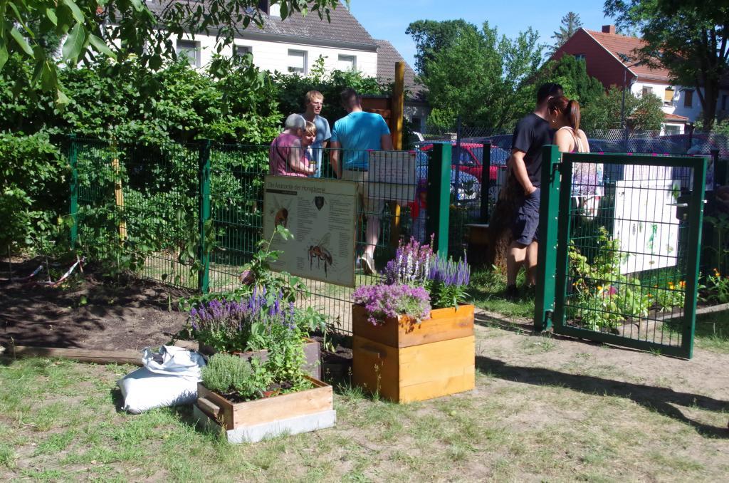 Robert Gummi im Einsatz am eingezäunten Bienenschaukasten der Schule