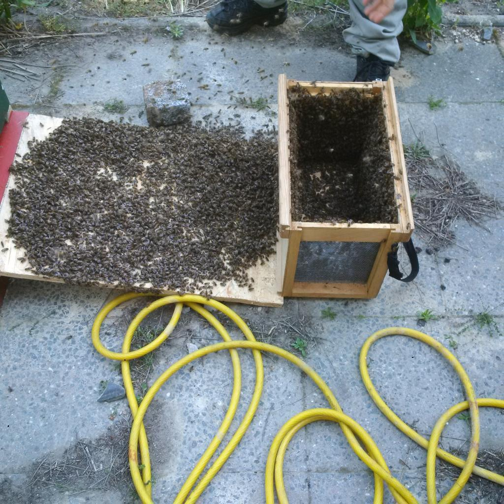 ...worauf sich die Bienen verteilten...