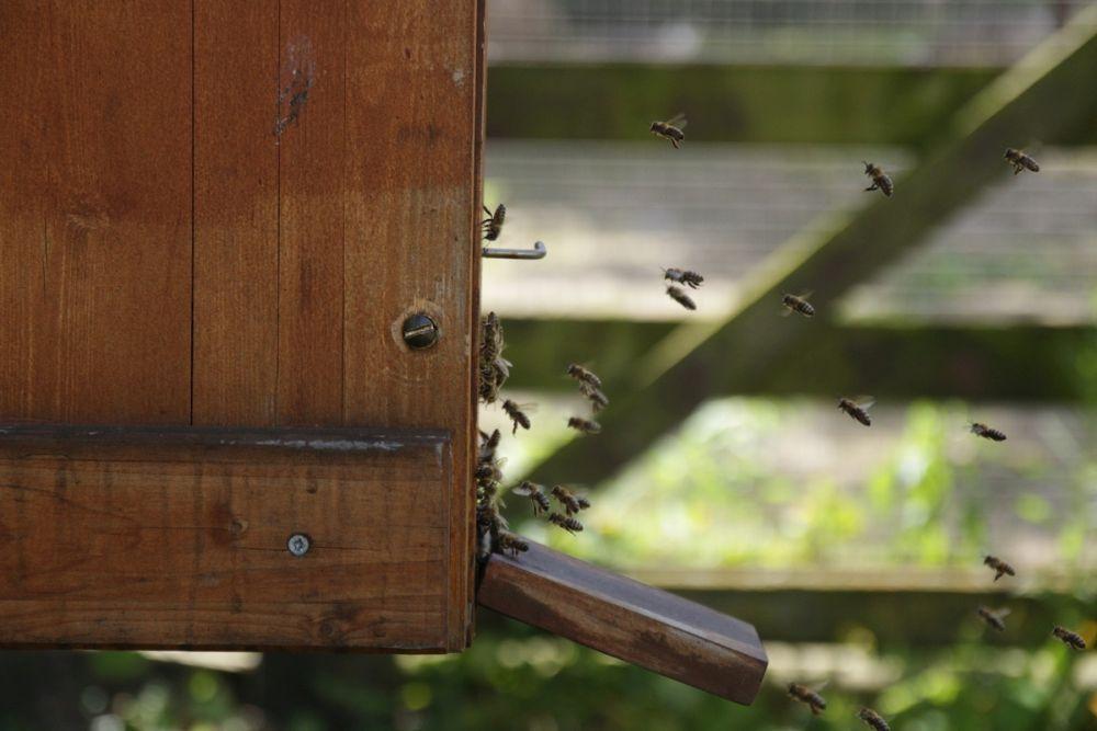 Die Hauptattraktion waren aber natürlich die Bienen im Vorgarten, die zum Königin-Suchen einluden.<br />Bild: Carola Schuldt