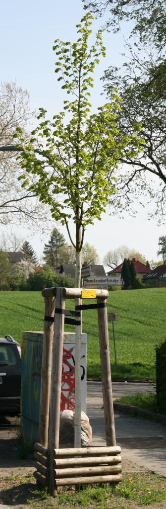 Sie steht Am Vierrutenberg Ecke Benekendorffstraße; im Hintergrund das Lübarser Feld am Vierrutenberg.