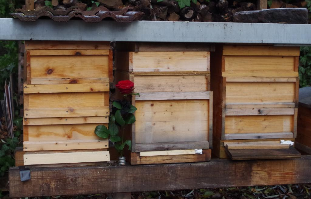 Ein letzter Blumengruß an die getöteten Völker - bis zum Auskratzen und Abflammen der Beuten bleiben sie verschlossen vor Ort.